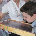 P6 Yr 5 Importance of Bees HASS smaller